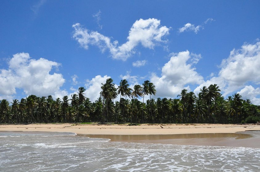 Sandy beaches and palmtrees in the dominican republic in front of the blue sky