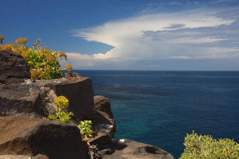 Felsformationen mit Blumen und dahinter das Meer